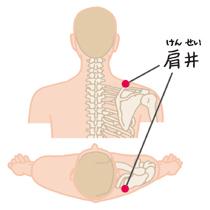 肩井(けんせい)-足の少陽胆経 | 豊川市で鍼灸(はり)治療|はりま ...
